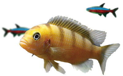 https://www.rostlinna-akvaria.cz/clanky-img/fish-large.png