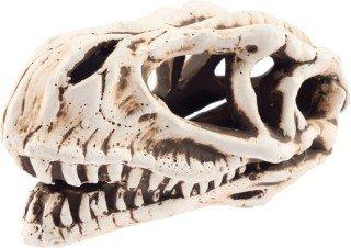 Lebka dinosaura č. 28065