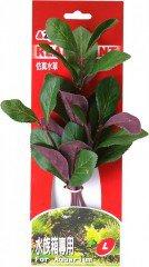 Azoo rostlina Lobelia cardinalis 20 cm AZ98022
