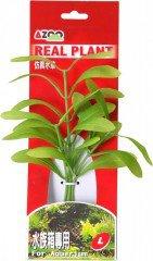 Azoo rostlina Hygrophila polysperma 20 cm AZ98024