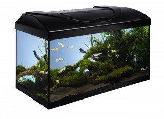Diversa akvarijní set Startup 60 černý 54l LED