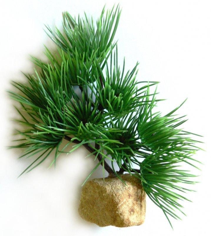 https://www.rostlinna-akvaria.cz/upload/22026-1011269329.jpg