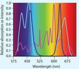 Rostliny a světelné spektrum