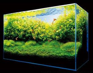 Bible osvětlení rostlinných akvárií