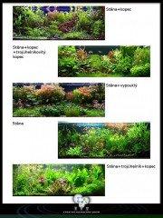 Povídání o aquascapingu: forma a tvar