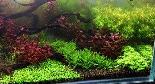 Údržba kobercových rostlin, jak je stříhat a co očekávat...