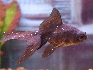 Nemoci akvarijních ryb a jejich léčba