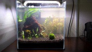 Jak na odstranění zákalů v akváriu pomocí Seachem Purigen