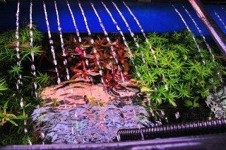Důležitost proudu v akváriu