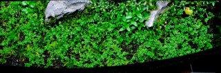 Metoda DSM - suché založení akvária