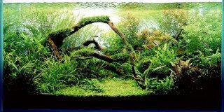 Základy CO2 v akváriu