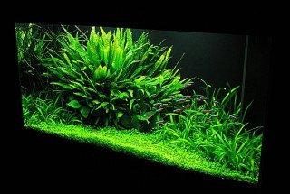 10 největších mýtů v rostlinné akvaristice