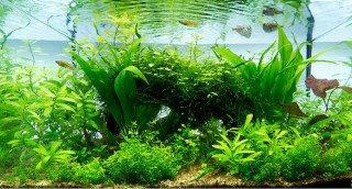 Zakládáme akvárium bez umělého přidávání CO2