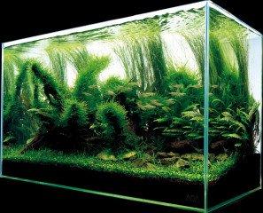 Co je to přírodní akvárium