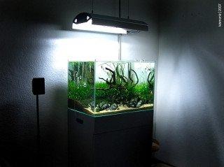 Jak vybrat nádrž pro aquascaping