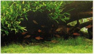 Pravidelný sestřih rostlin a dlouhodobá údržba akvária