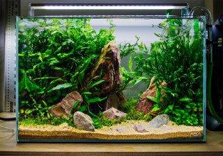 Jak levně založit akvárium v ADA stylu