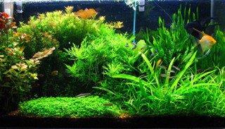 Jak založit rostlinné akvárium bez přidávání CO2