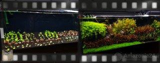 Jak hnojit v akváriu založeném na substrátu Platinum Soil