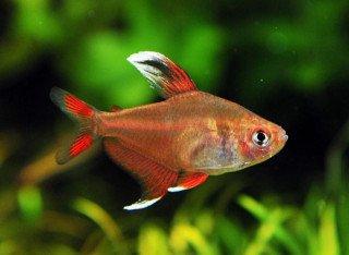 Kde koupit akvarijní rybky - seznam ověřených chovatelů