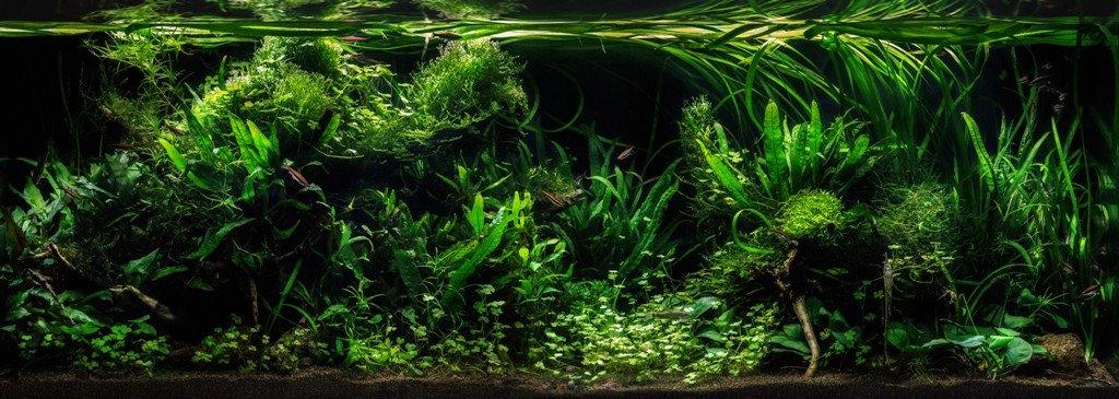 https://www.rostlinna-akvaria.cz/upload/26464-1912506713.jpg