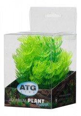 ATG Premium rostlina Mini (8-14cm) 203