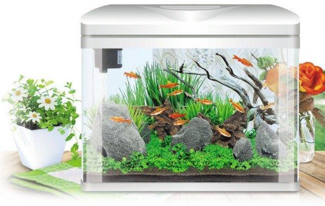 https://www.rostlinna-akvaria.cz/upload/28088-2102162674.jpg