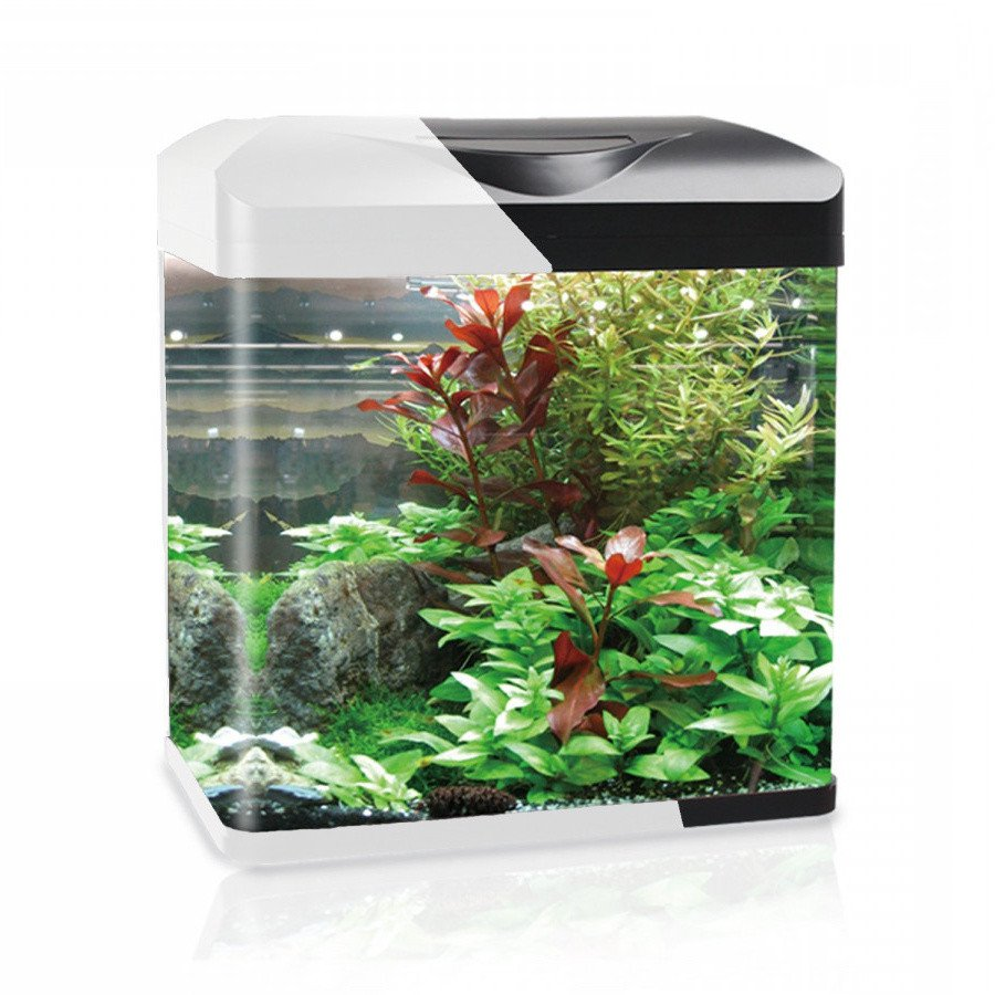 https://www.rostlinna-akvaria.cz/upload/28089-2102025801.jpg