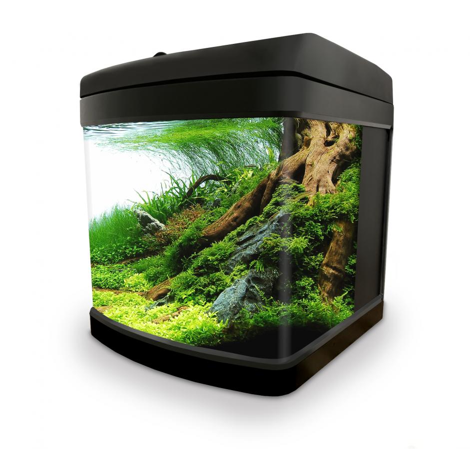 https://www.rostlinna-akvaria.cz/upload/28309-1102461807.png