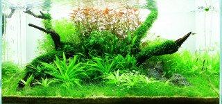 Inspirace a tipy na výběr rostlin