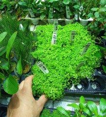 Jak balíme a posíláme rostliny
