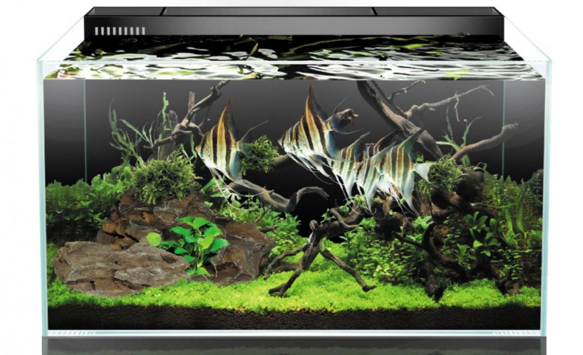 Optiwhite akvárium se zadní filtrací 60x33x36 cm černá