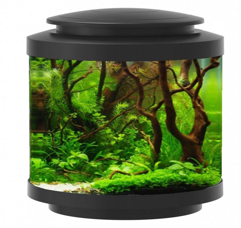 https://www.rostlinna-akvaria.cz/upload/38367-1802133557.jpg
