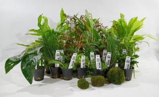 Videonávod jak sadit akvarijní rostliny