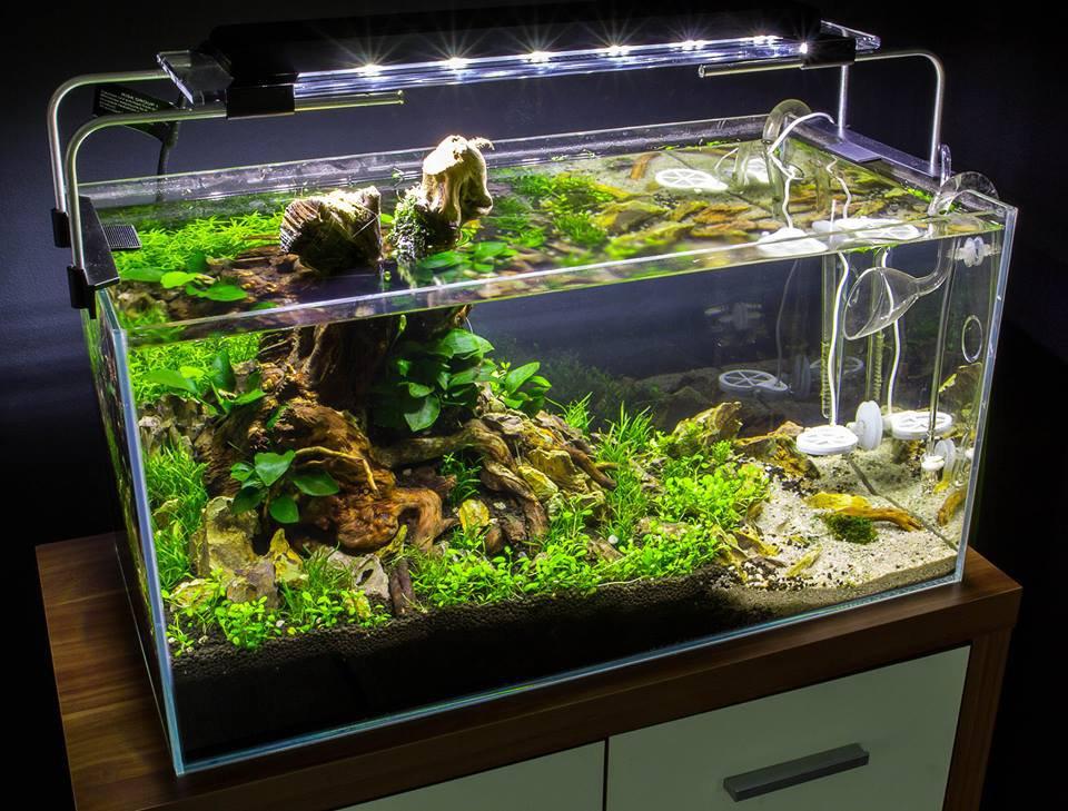 Akvárium v ada stylu