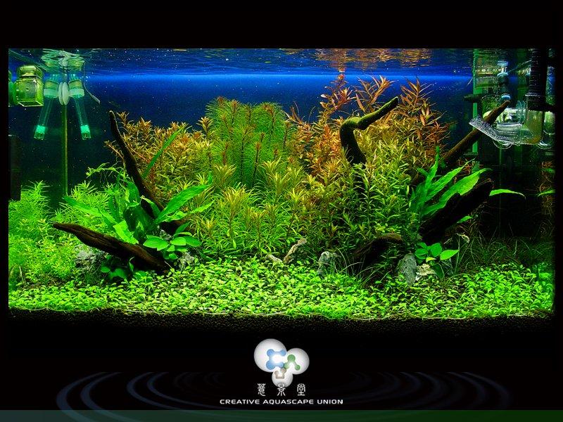 nature aquarium 1