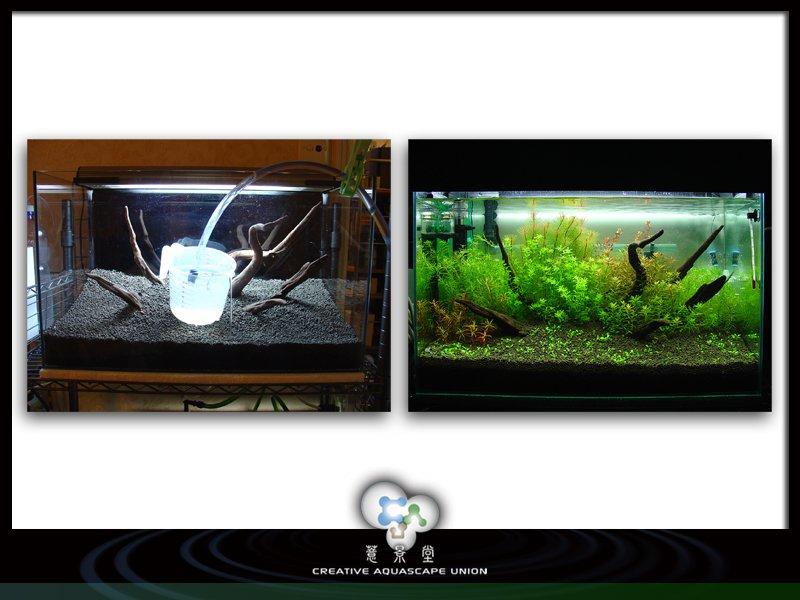 nature aquarium 6