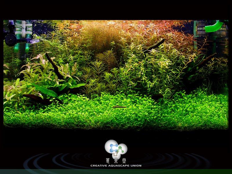 nature aquarium 7