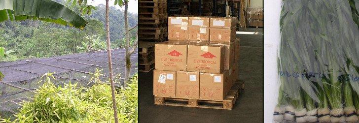 import rostlin z Asie