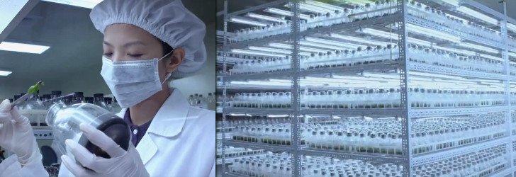 Laboratoř na přesazování in-vitro