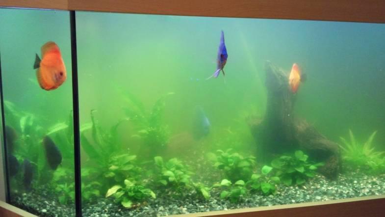 Nálevník v akváriu