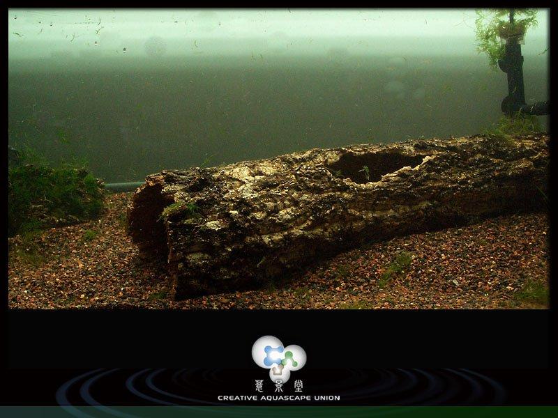 nature aquarium 2