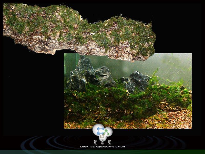 nature aquarium 5