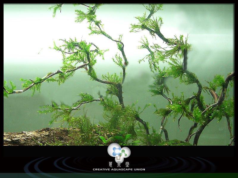 nature aquarium 8