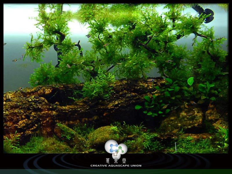 nature aquarium 9