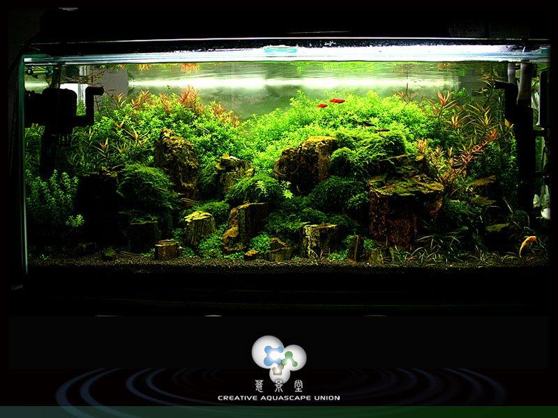 nature aquarium 10