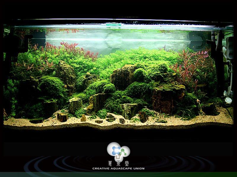 nature aquarium 11
