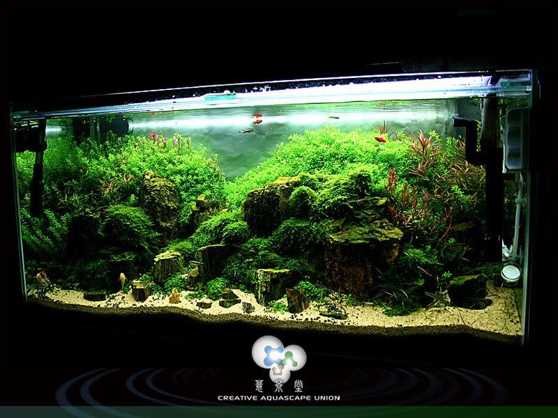 nature aquarium 12