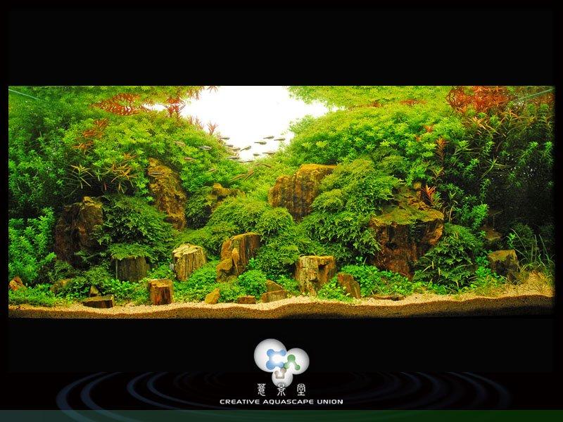 nature aquarium 13