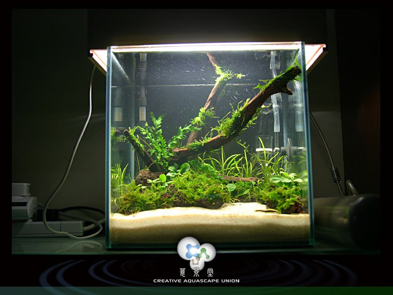 nature aquarium 11